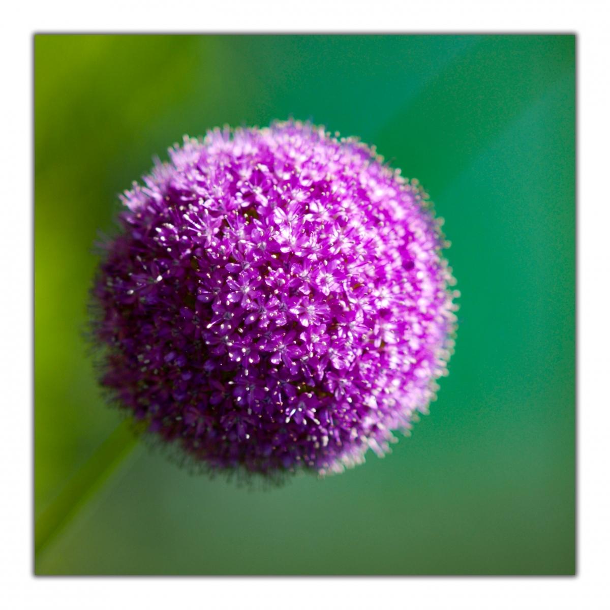 240520 villa veronica fiore