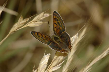 Farfalle 0020