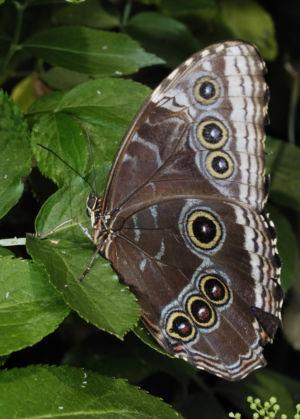 Farfalle 0027