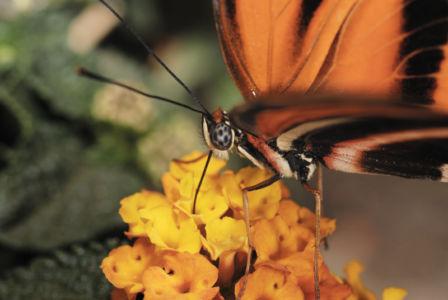 Farfalle 0033